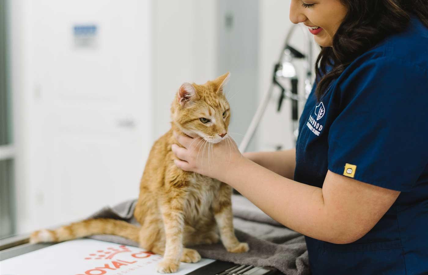 Pet Diagnostic Visits