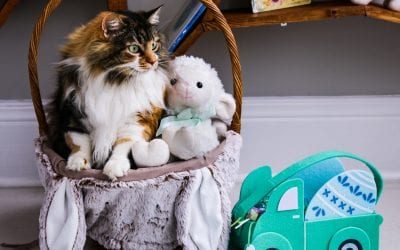 Easter Hazards to our Pets