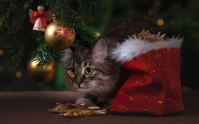 Avoid these Holiday Hazards for Your Pets