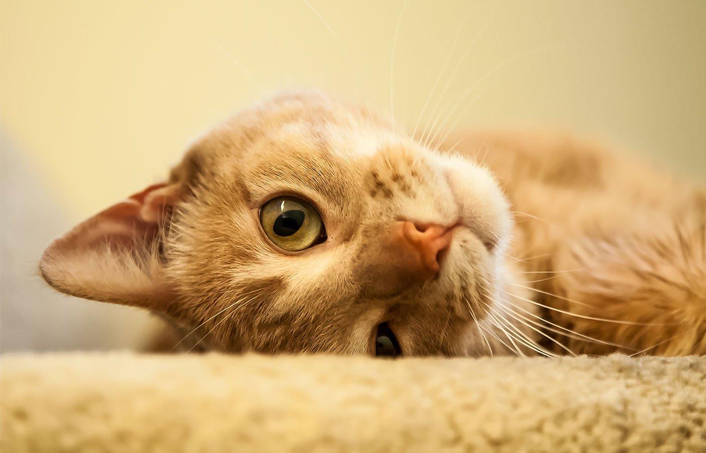 Pet Wellness Exams